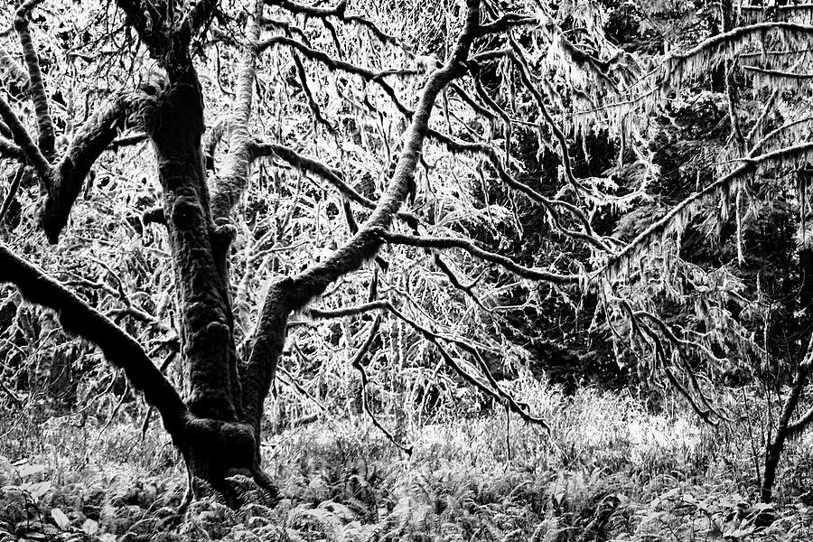 FOrest and the trees BW by Cathy Anderson