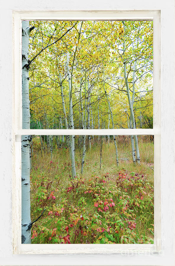 Forest Delight White Rustic Window View by James BO Insogna