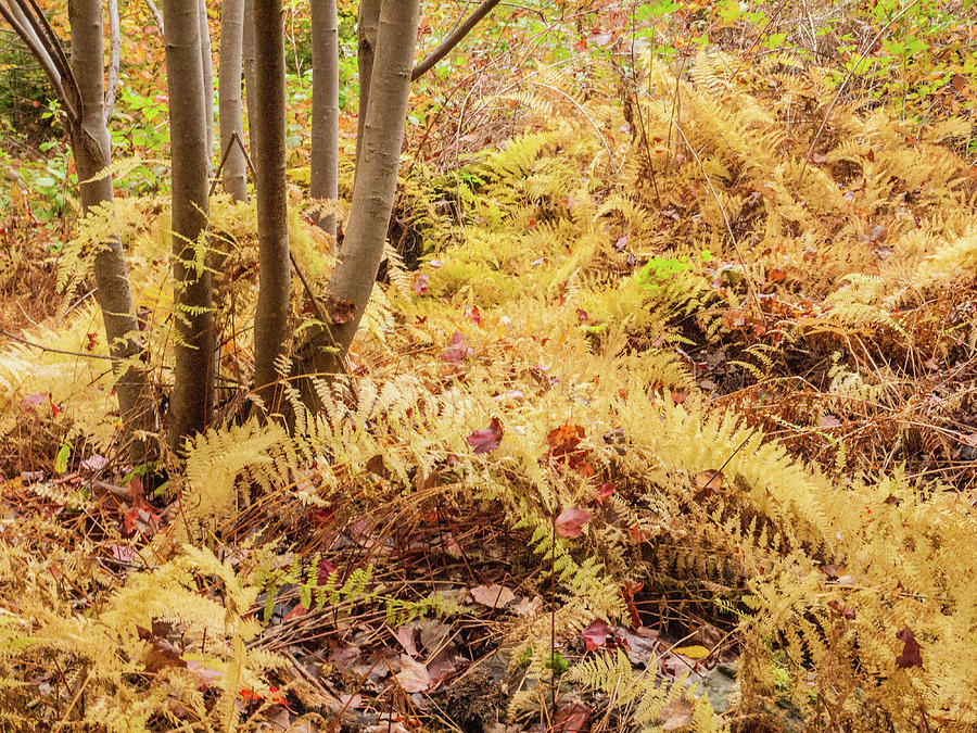 Forest floor. by Rob Huntley