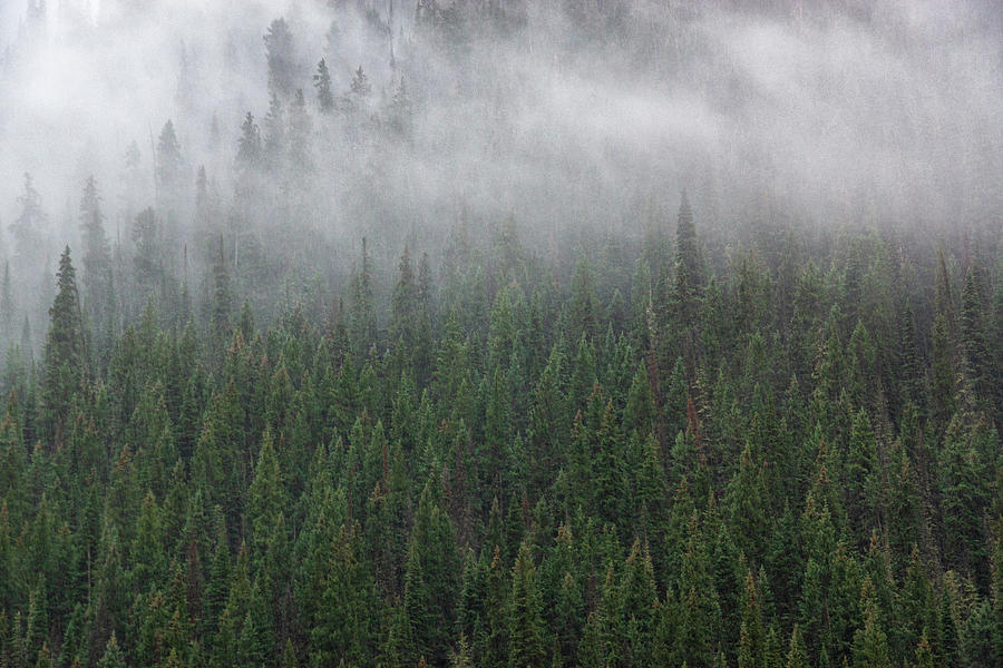 Forest Fog by John De Bord