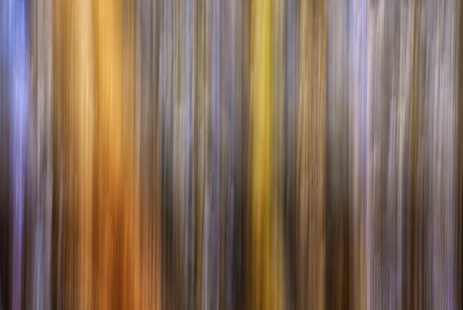 Forest Hues by Art Cole
