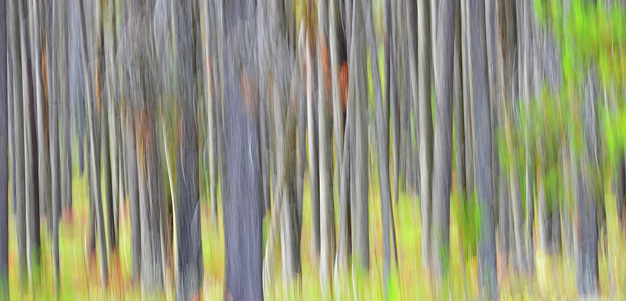 Forest Illusions- Spring Delight Photograph