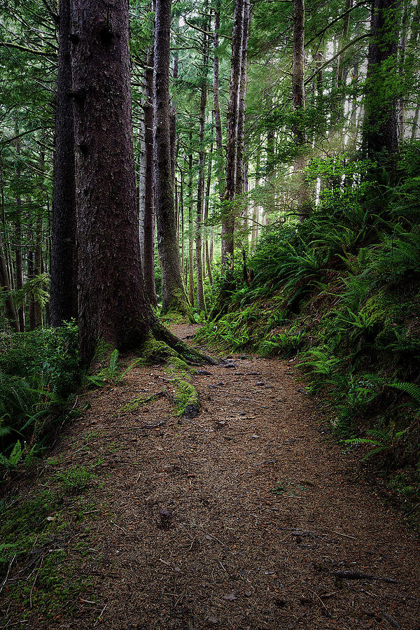 Forest In Oregon Photograph