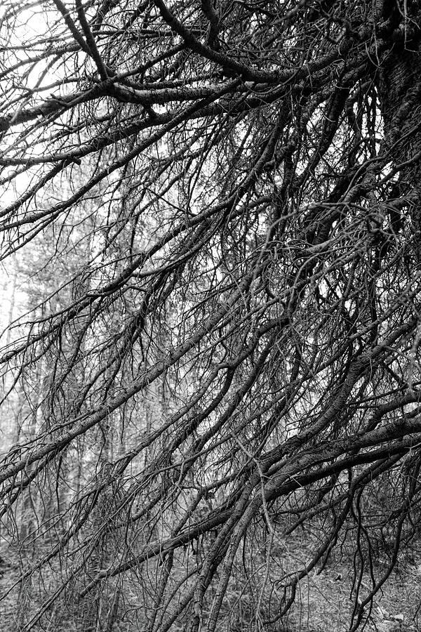 Forest Lines Photograph