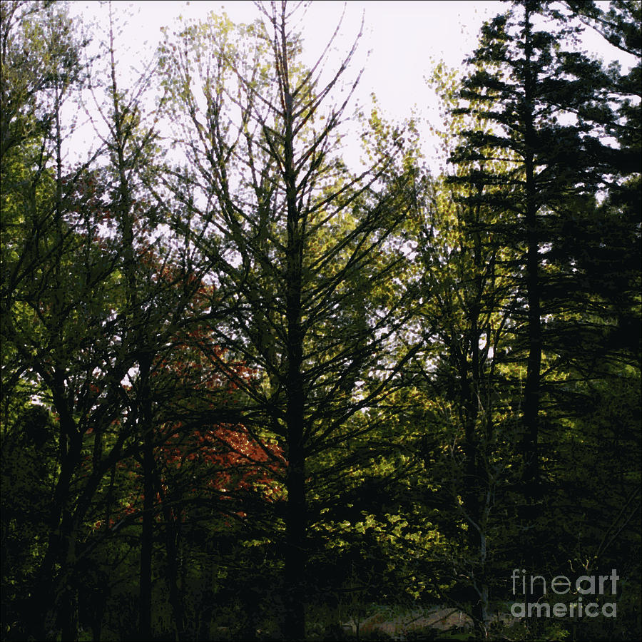 Forest Morning Light Impressionism Photograph