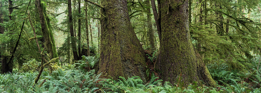 Forest Panorama by Robert Potts