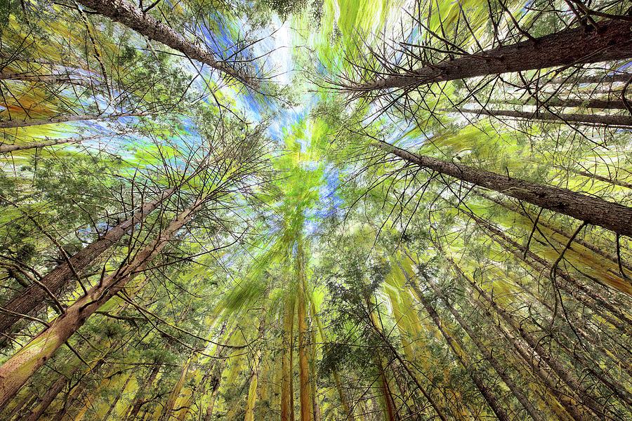 Forest Particles Photograph