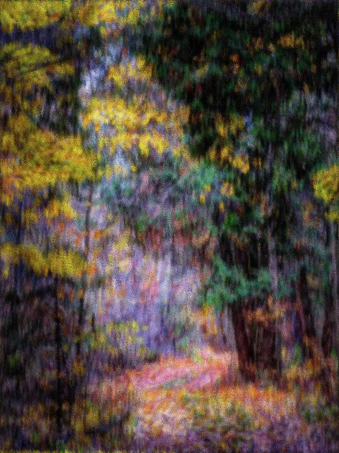 Forest Path by David Heilman