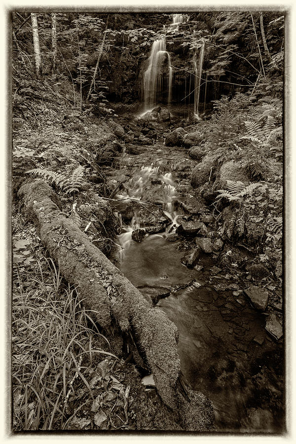 Forest Raveen and Waterfall by Irwin Barrett