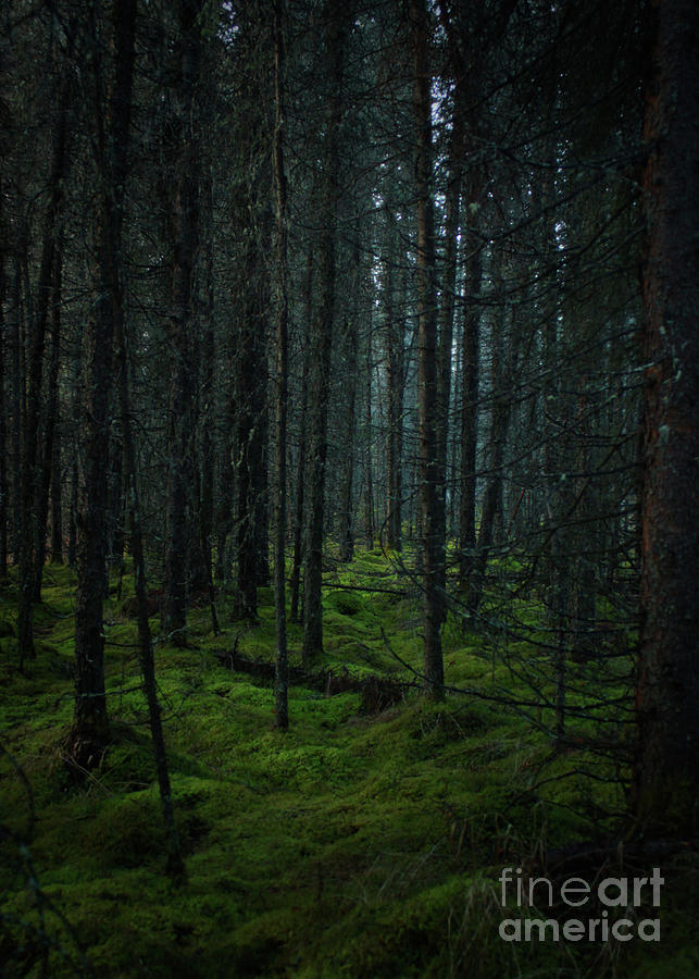 Forest Photograph by Ross Coleman