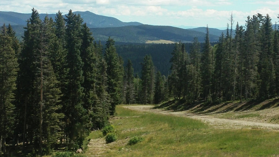 New Mexico Photograph - Forest View by Lea Rhea Photography