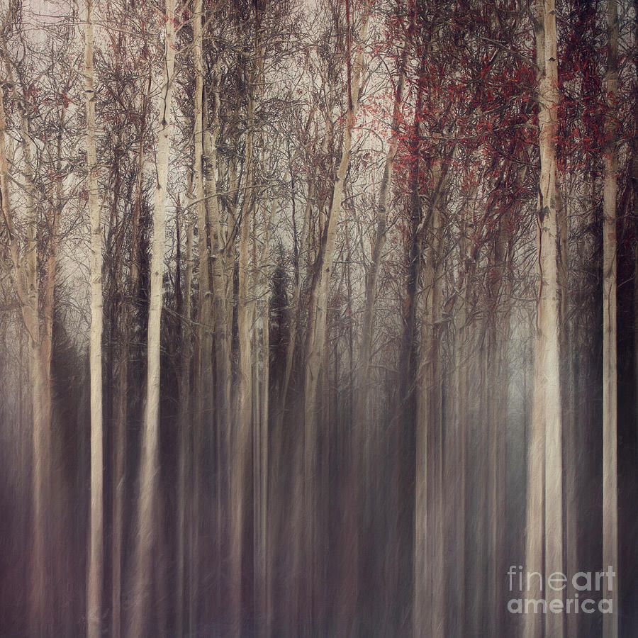 Aspen Trees Photograph - Forest With A Mood by Priska Wettstein