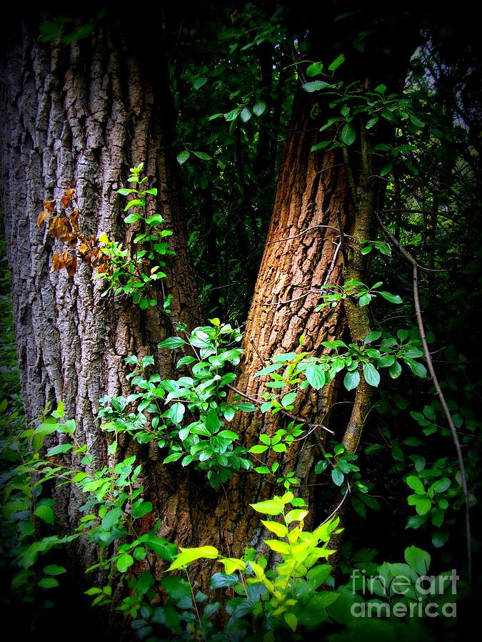 Landscape Photograph - Forest Wood - Color - Frank J Casella by Frank J Casella