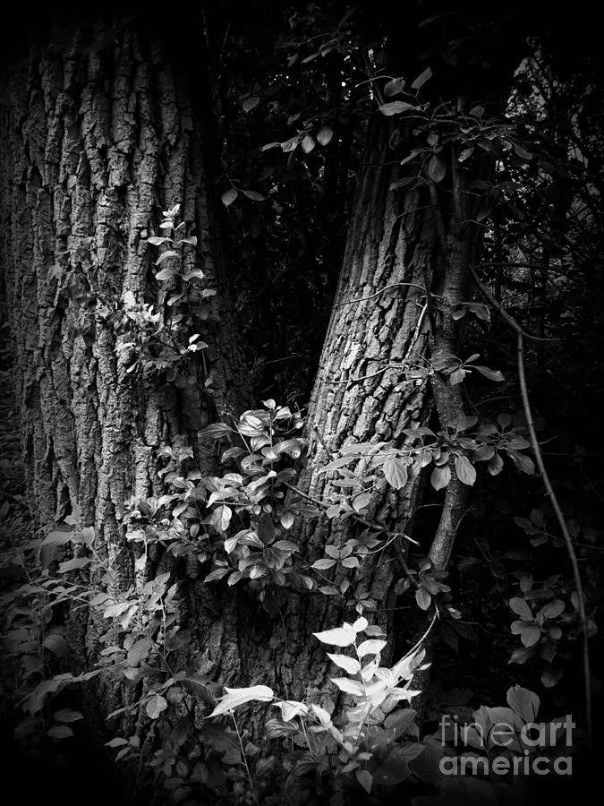 Holga Photograph - Forest Wood - Holga - Frank J Casella by Frank J Casella