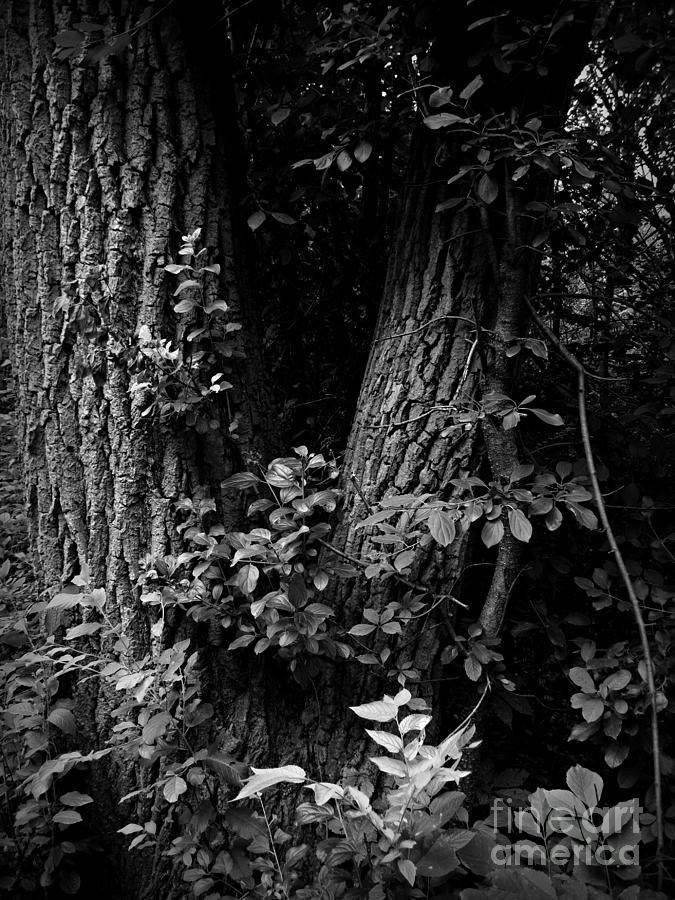 Monochrome Photograph - Forest Wood - Monochrome - Frank J Casella by Frank J Casella