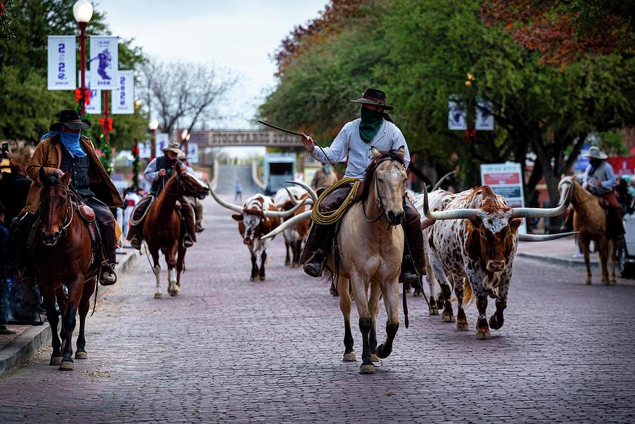 Fort Worth Stockyards Cattledrive Photograph