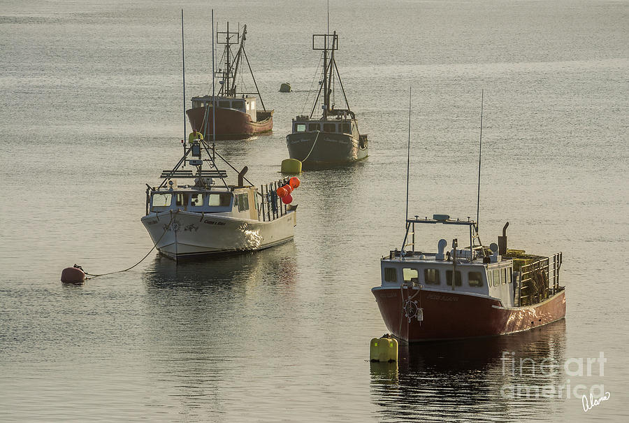 Four Lobster Boats Photograph