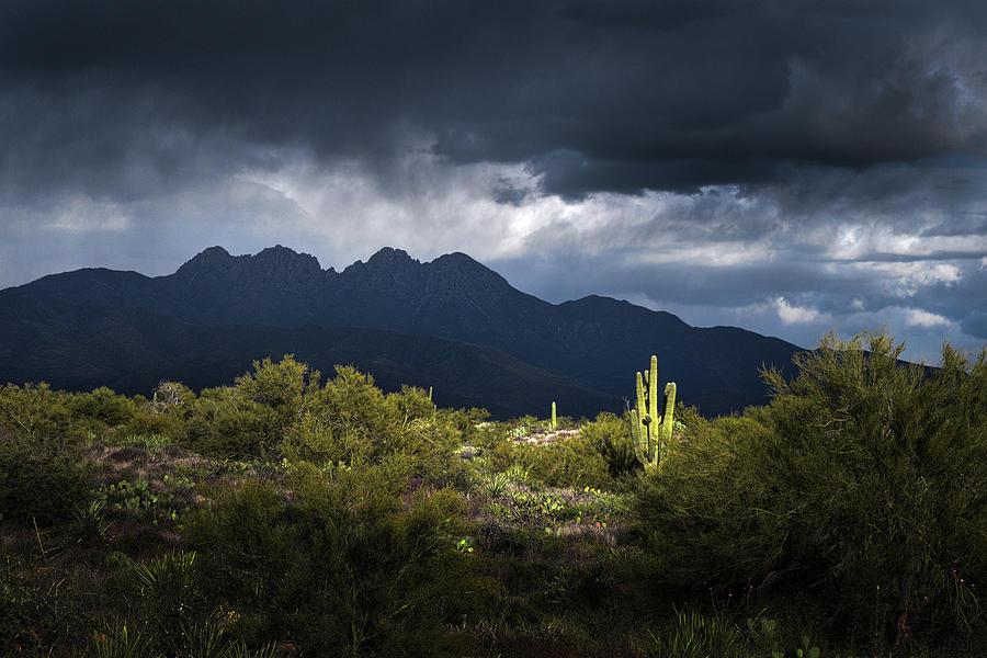Four Peaks Saguaro Cactus Photograph