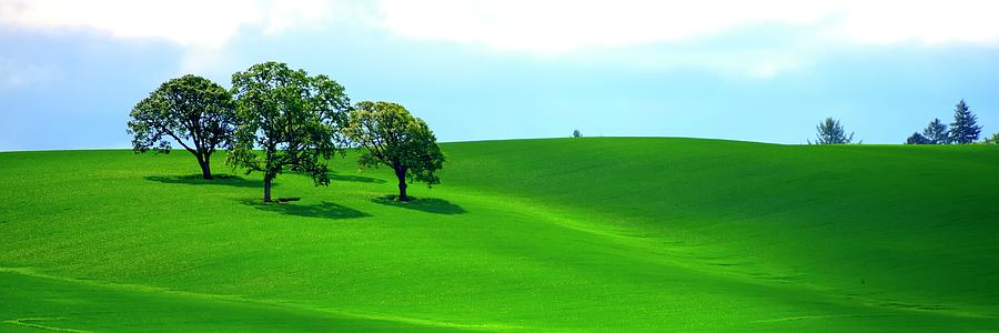 Four Trees On The Hill Photograph