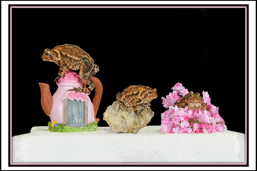 Fowlers Toad Trio Mixed Media