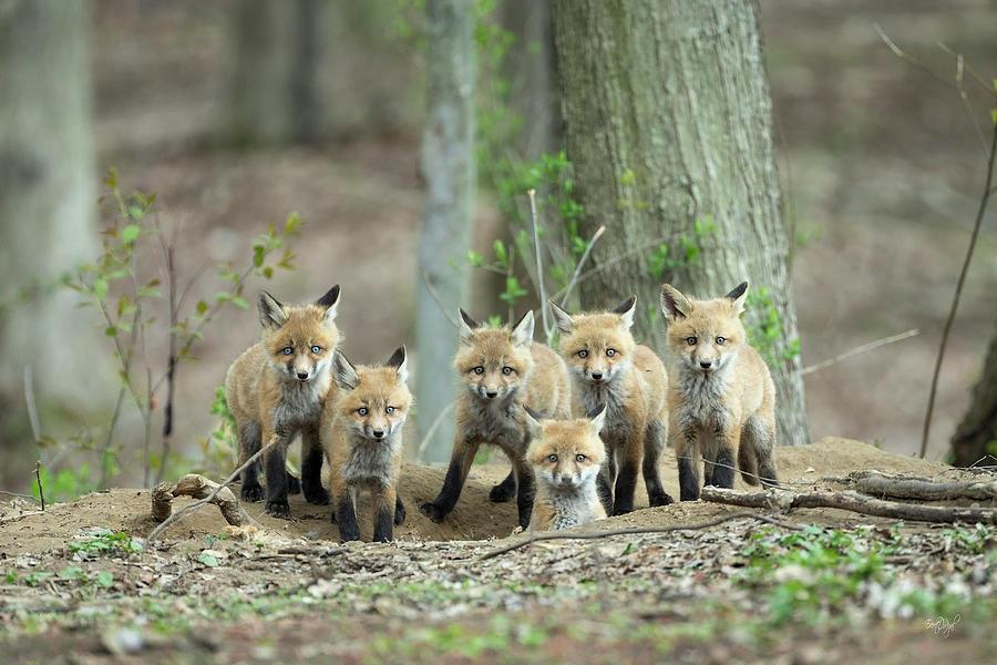 Fox Family Portrait Photograph