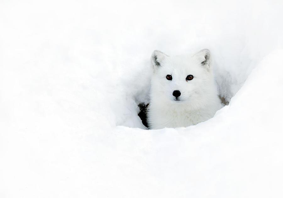 Fox Hole by Art Cole