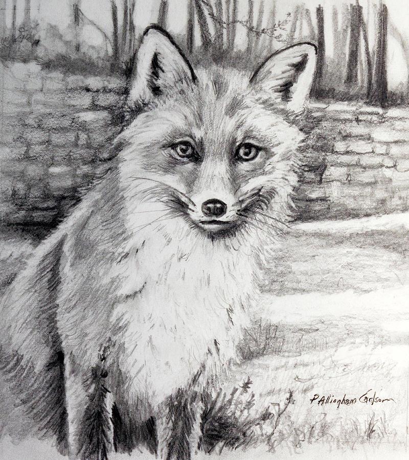 Fox In The Yard Drawing