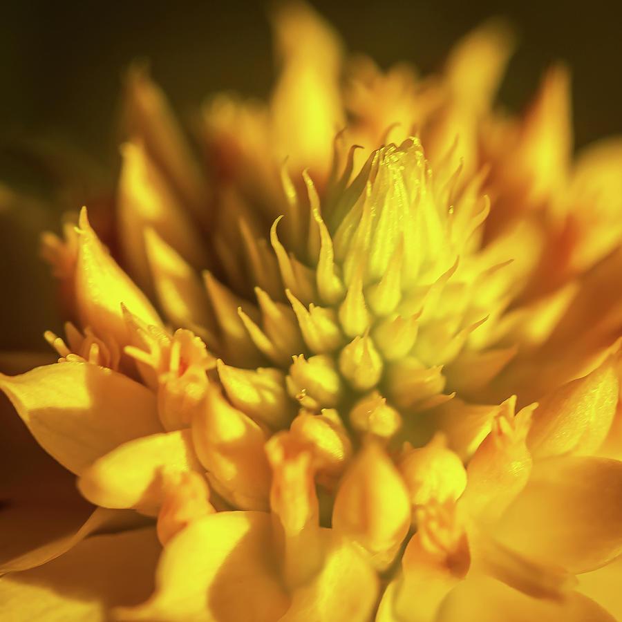 Fox Lake Wildflower Photograph