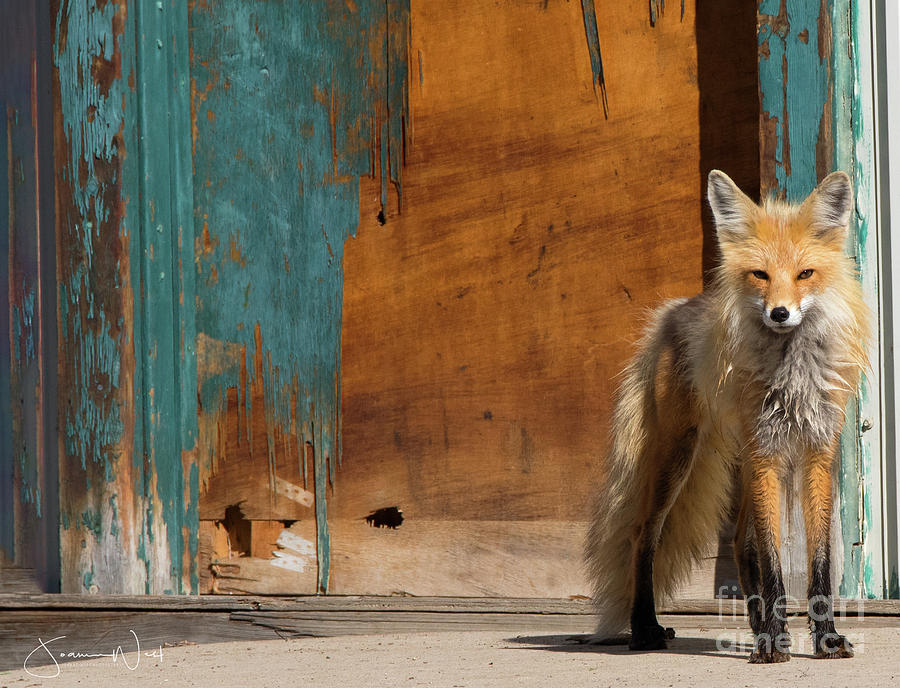 Foxy Momma by Joanne West