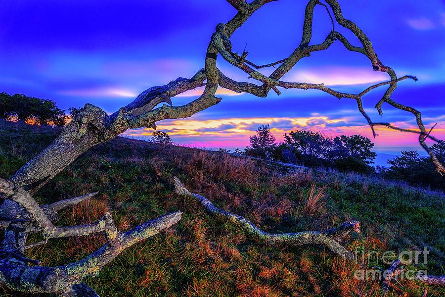 Fractured Autumn by Dan Carmichael