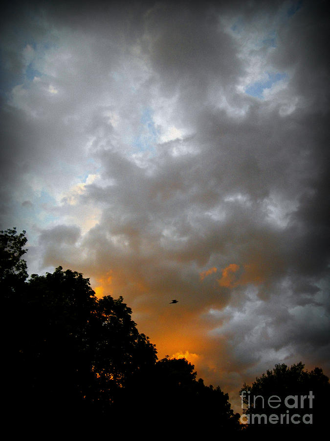 Free Bird And Sunset Clouds - Photo By Frank J Casella Photograph
