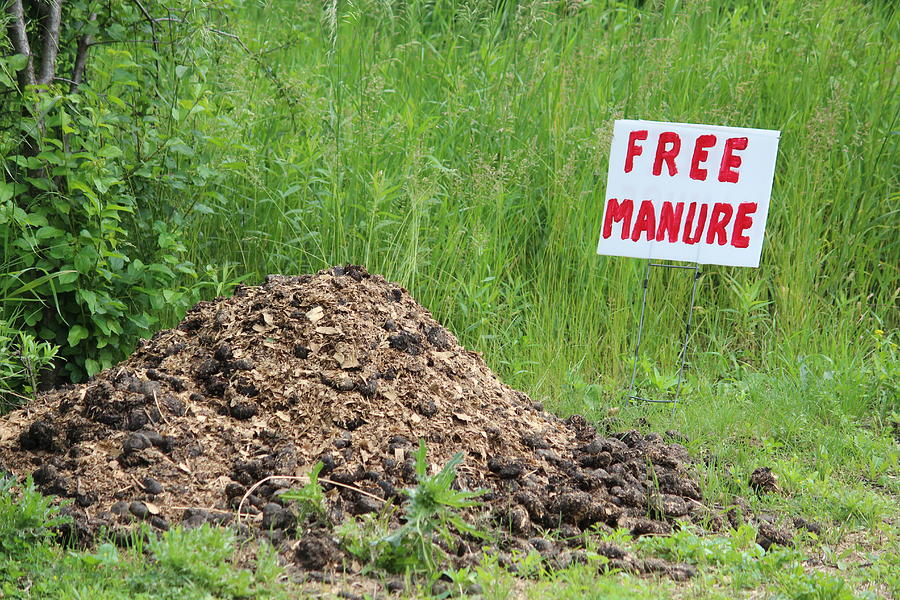 Manure Photograph - Free Manure by Callen Harty