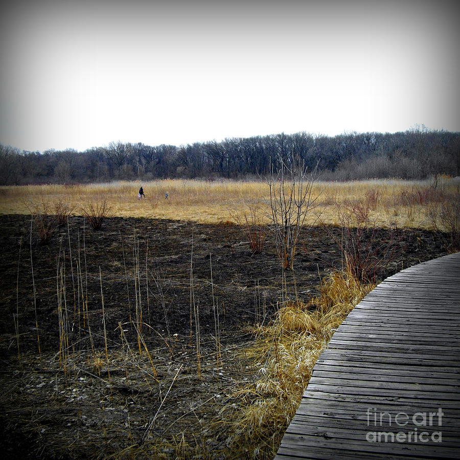 Color Photograph - Freedom in the Wetlands Brush by Frank J Casella