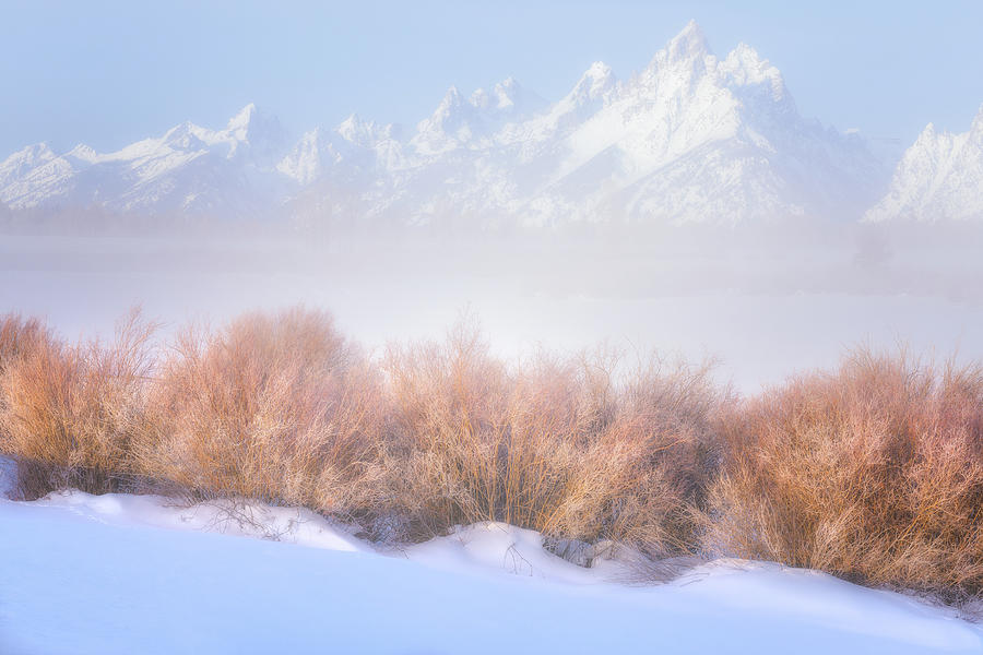 Fresh Fog In The Valley Photograph