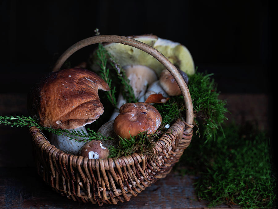 Fresh Porcini Mushrooms Photograph