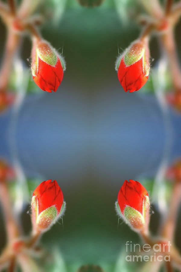 Fresh red flower bud surreal shaped symmetrical kaleidoscope by Gregory DUBUS