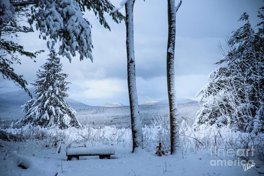 Fresh Snowfall by Alana Ranney