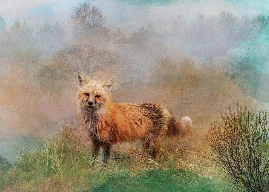 Friendly Fox - Hello by Patti Deters