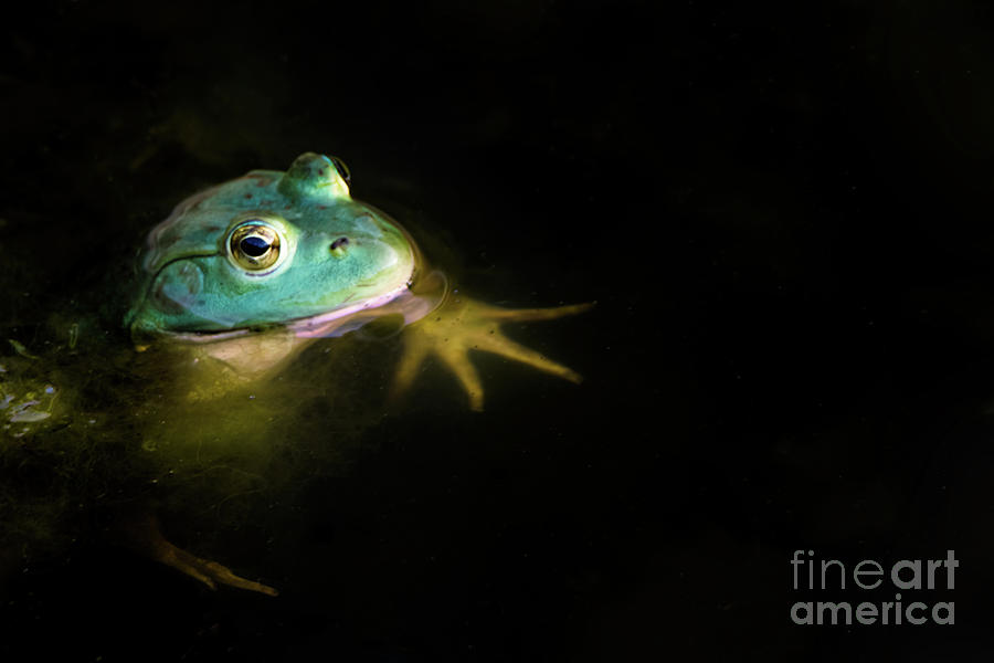 Frog Photograph - Frog by Gaby Swanson