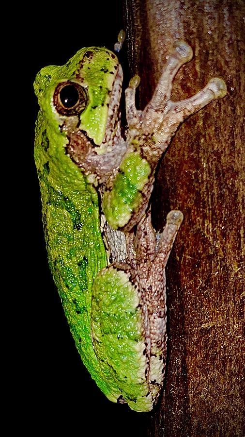 Frog Photograph