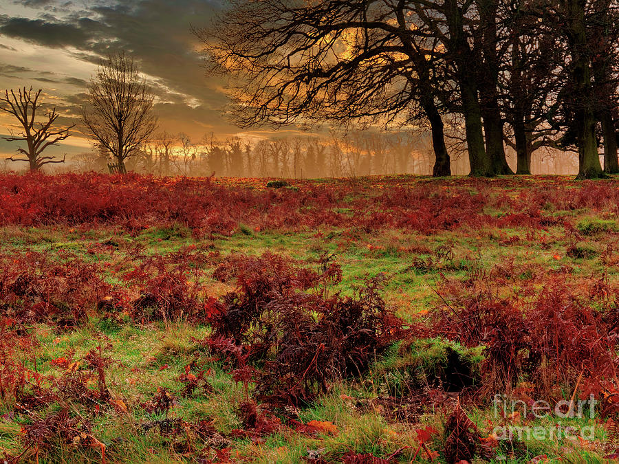 Bushy Park Photograph - From Here To Infinity by Leigh Kemp