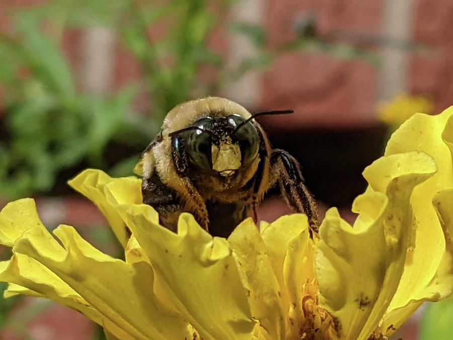 From The Front Bee Photograph