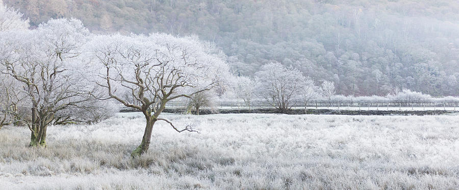 Frost laced tree, winter's morning, Borrowdale, Lake District - panorama by Anita Nicholson