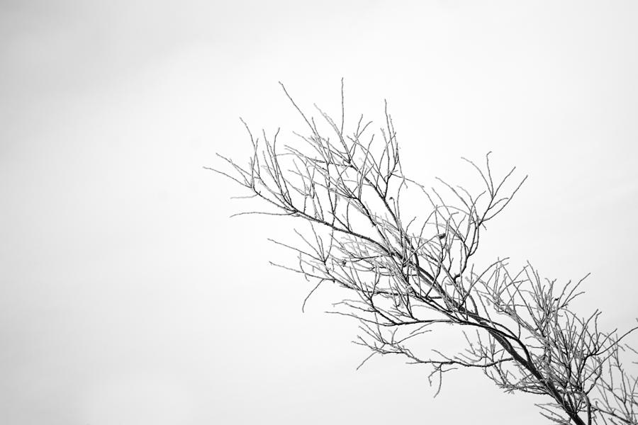 Frosted Branches by Tim Beebe