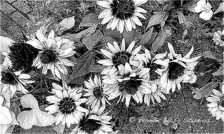 Frosted Floral In Black and White by Yvonne Blasy