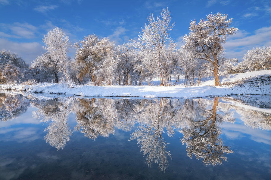 Frosted Trees by Darren White