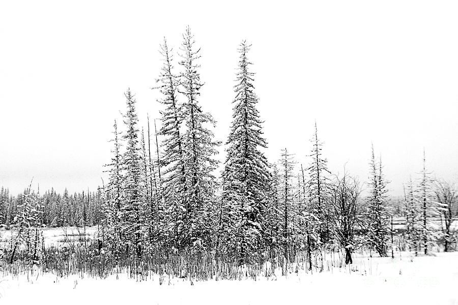 Winter Photograph - Frosty Forest by Roland Stanke