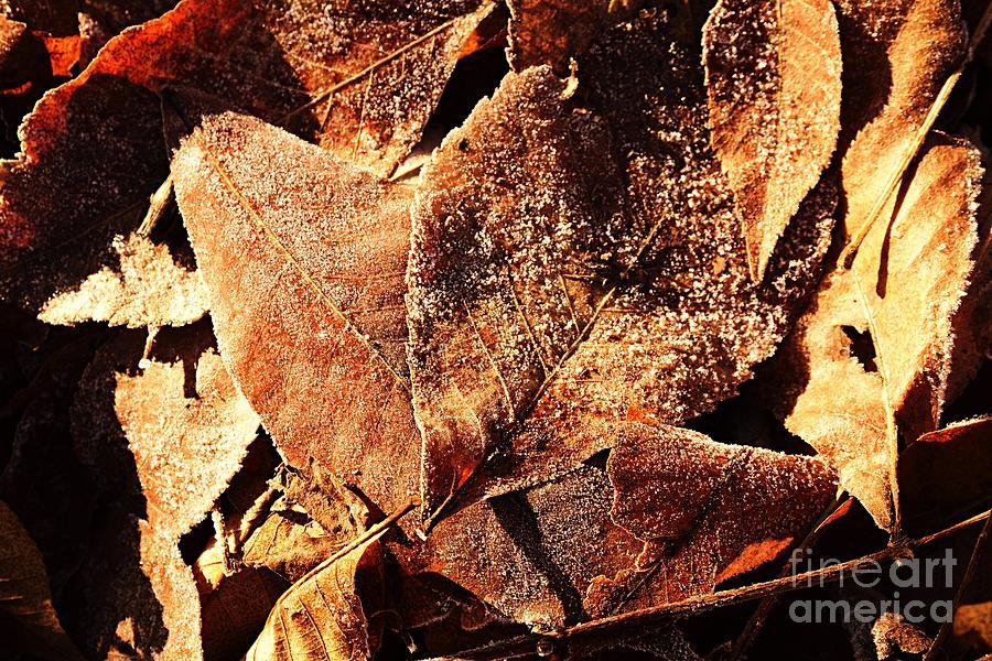 Frosty Leaves by Larry Ricker