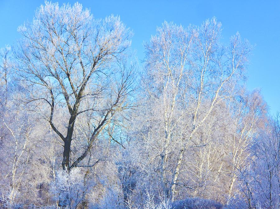 Frosty Morning Photograph