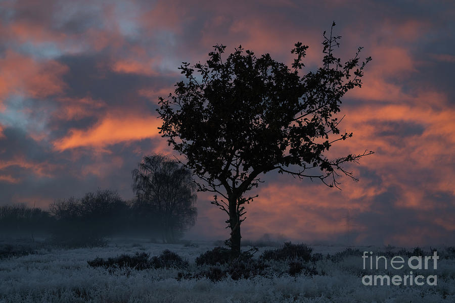 Frosty Sunrise At Chasewater Country Park Photograph
